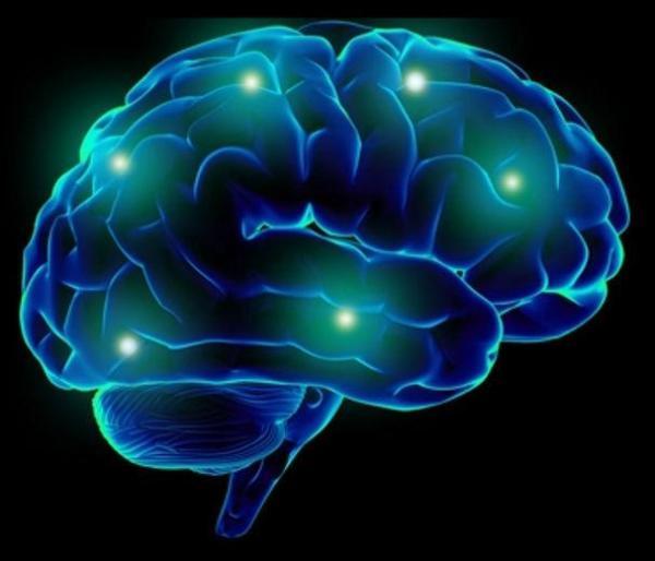 2. brain
